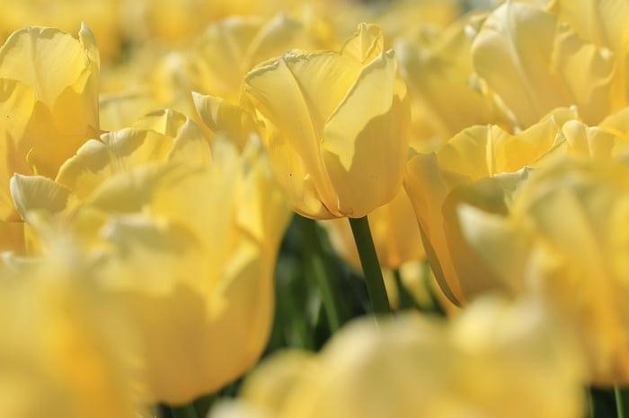 4 variétés de fleurs à planter dans son jardin pour plus de couleurs