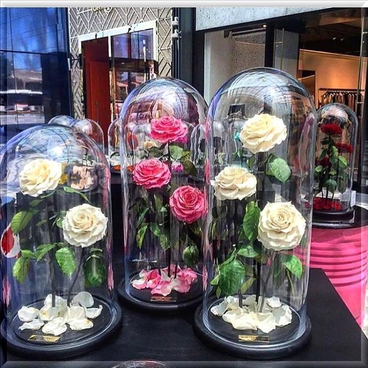 pourquoi offrir les rose éternelle