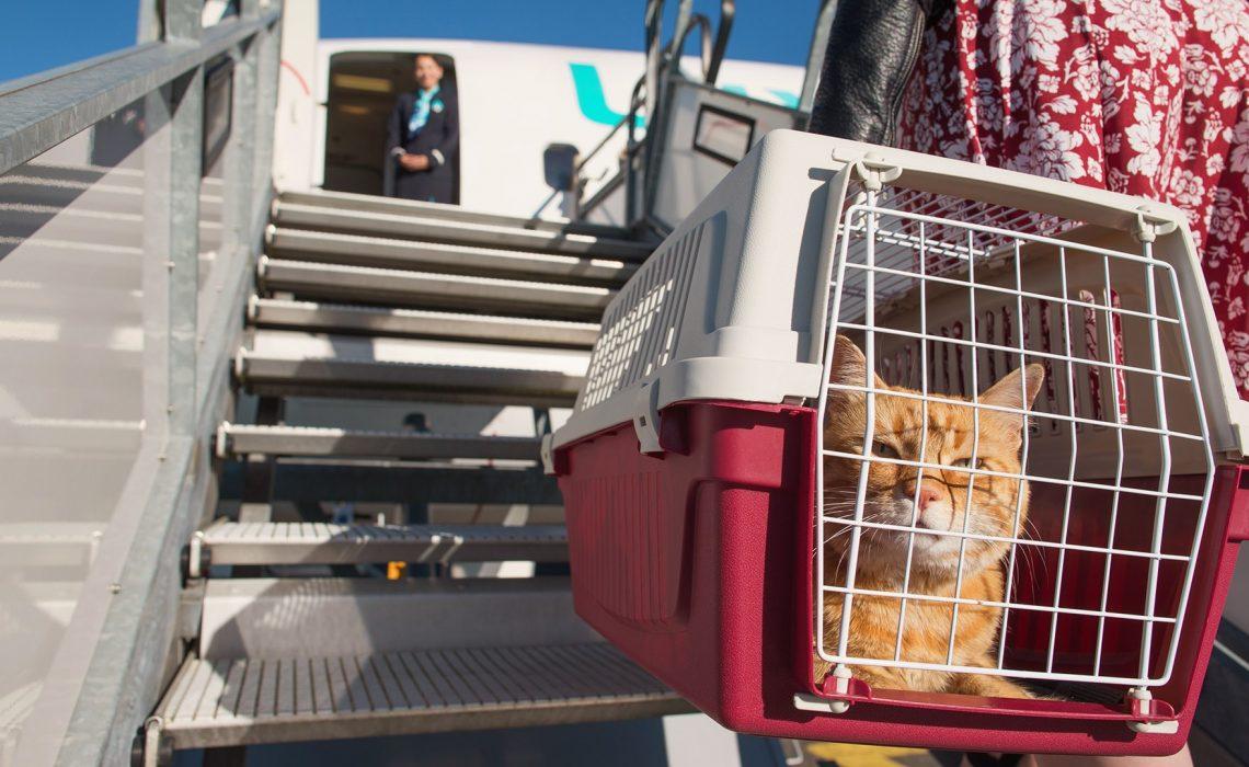 Comment partir en vacances quand on a un animal de compagnie ?